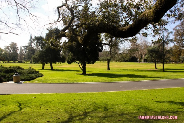 Lacy Park from Say Anything-7020